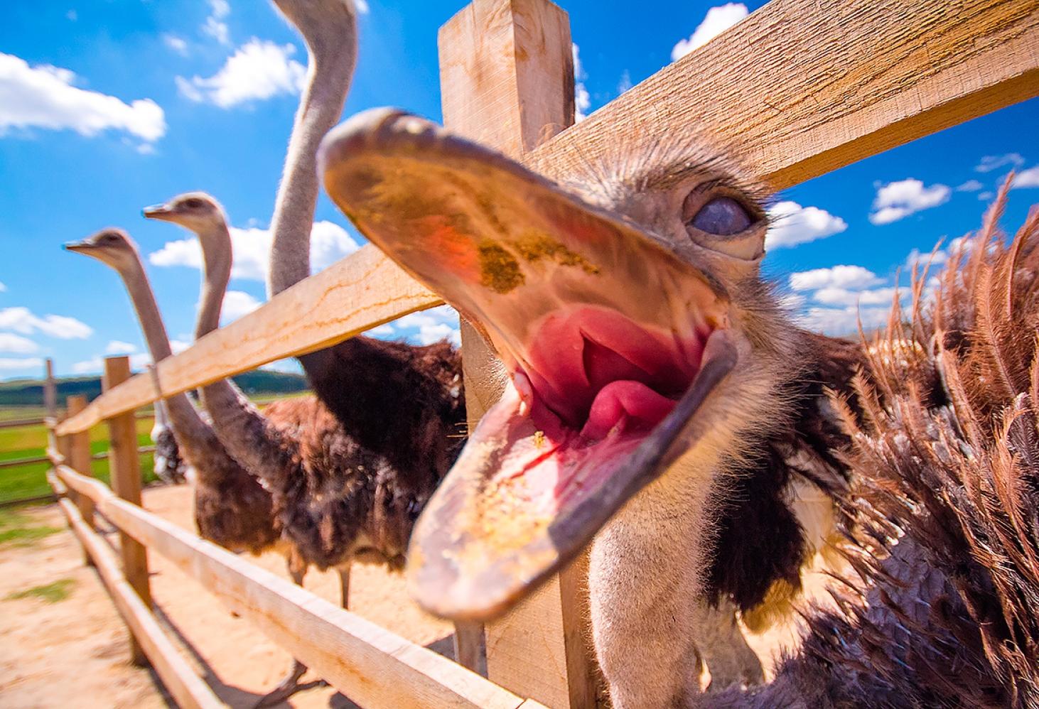 Национальный зоопарк Претории, Южная Африка