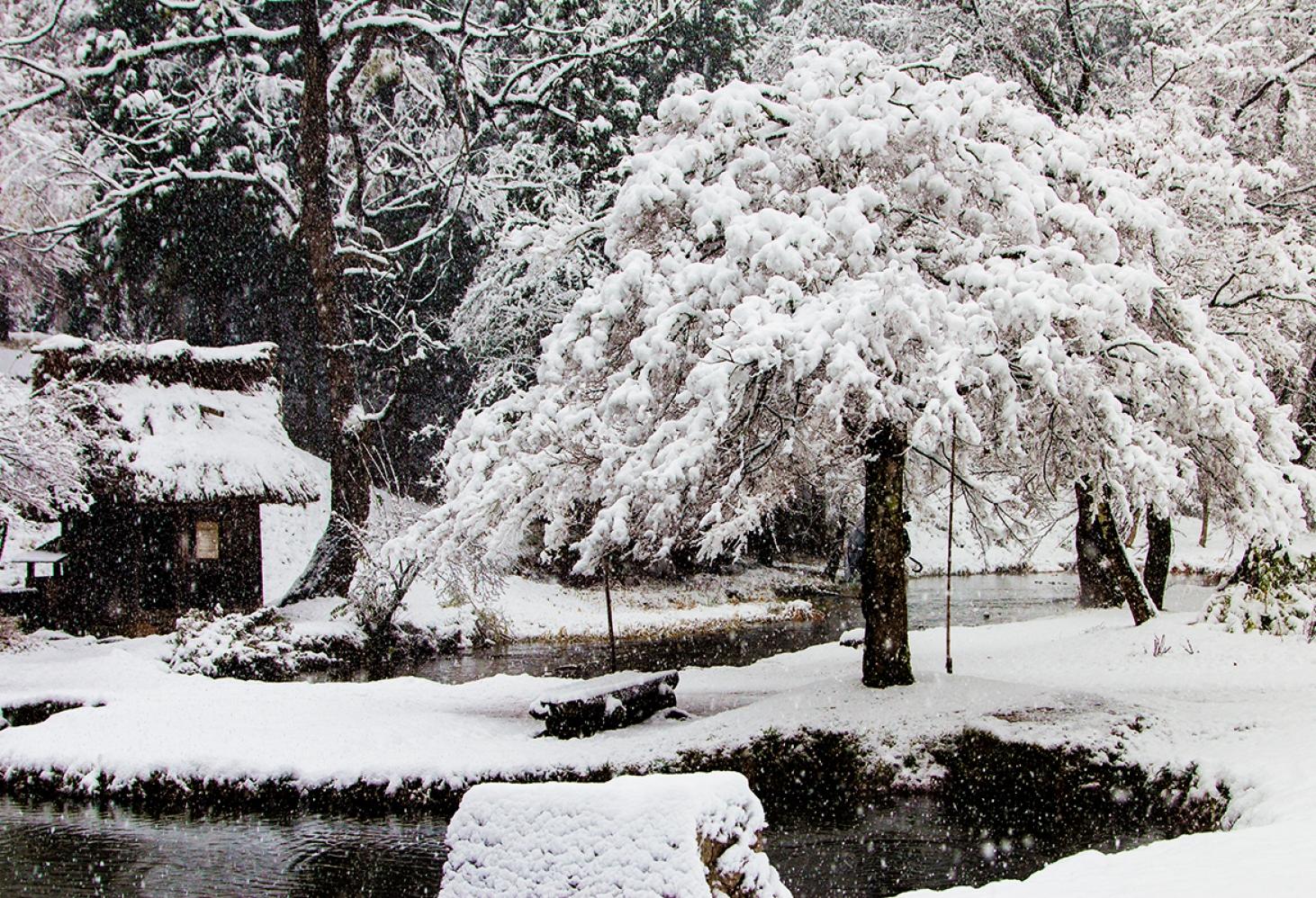 Сиракава (Япония)